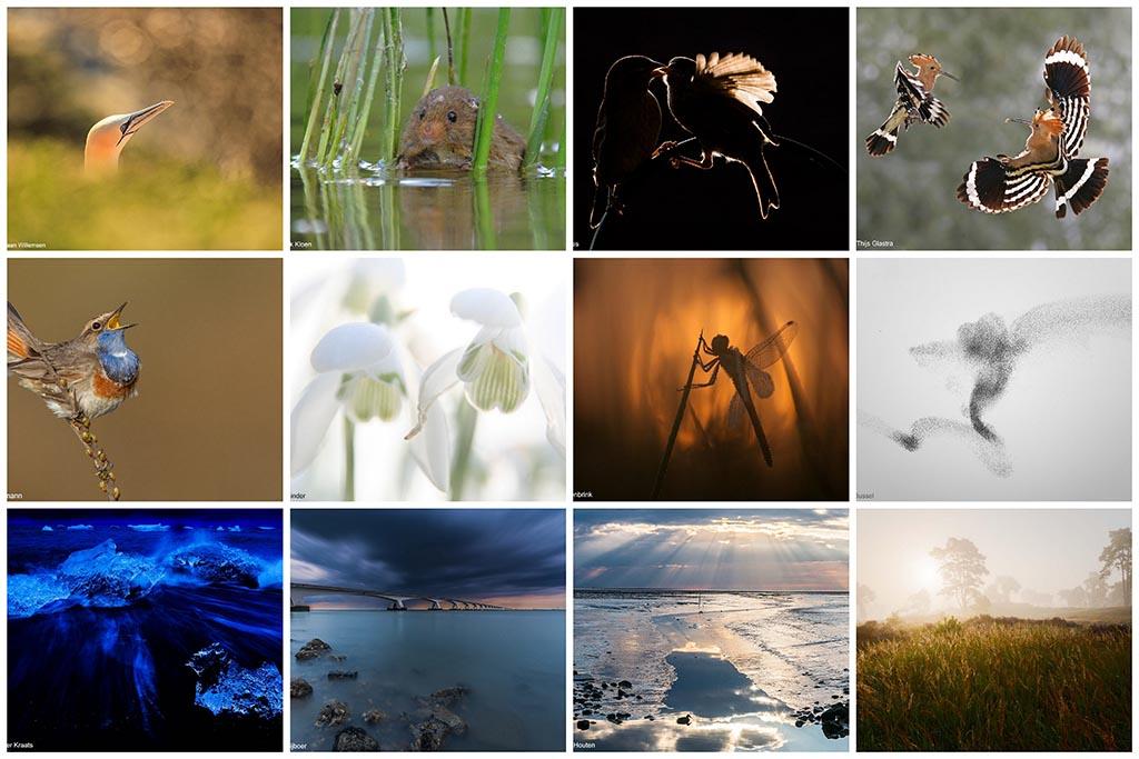 Jonge Natuurfotografen