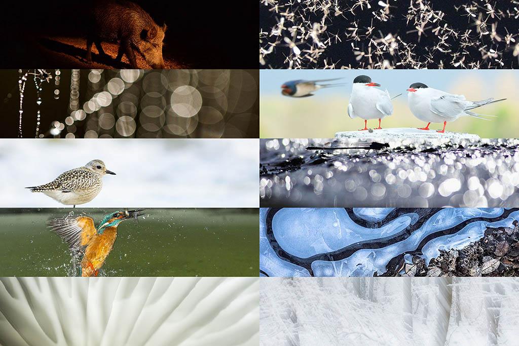10 Groene Camera inzendingen door jonge natuurfotografen