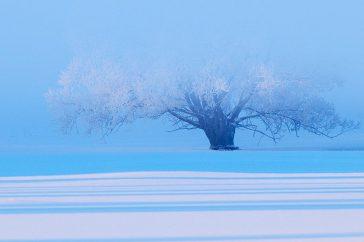 Boom in blauw en wit