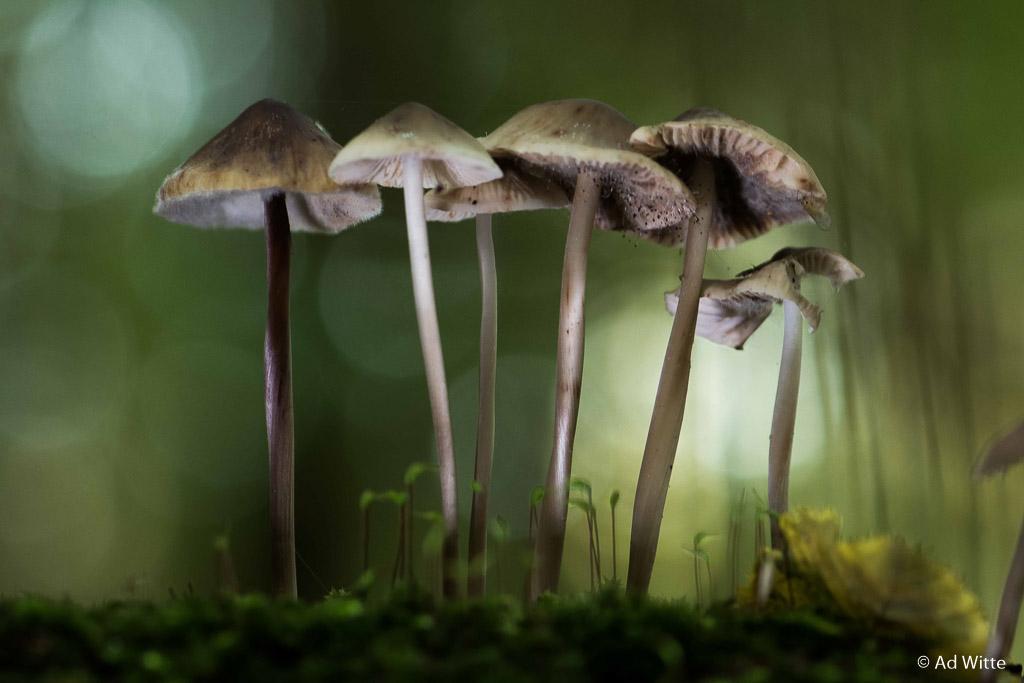 Fotobespreking thema 'paddenstoelen': Ad en Annette