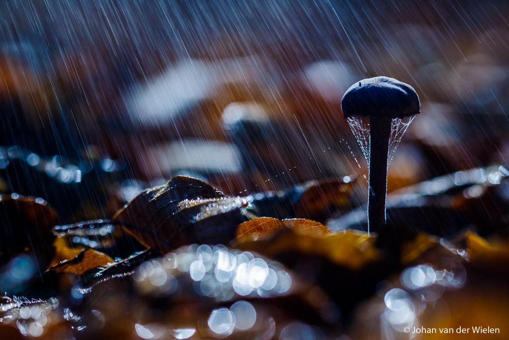 Paddo in de regen