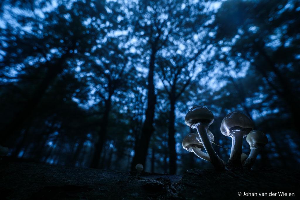 Mysterie van het donkere bos