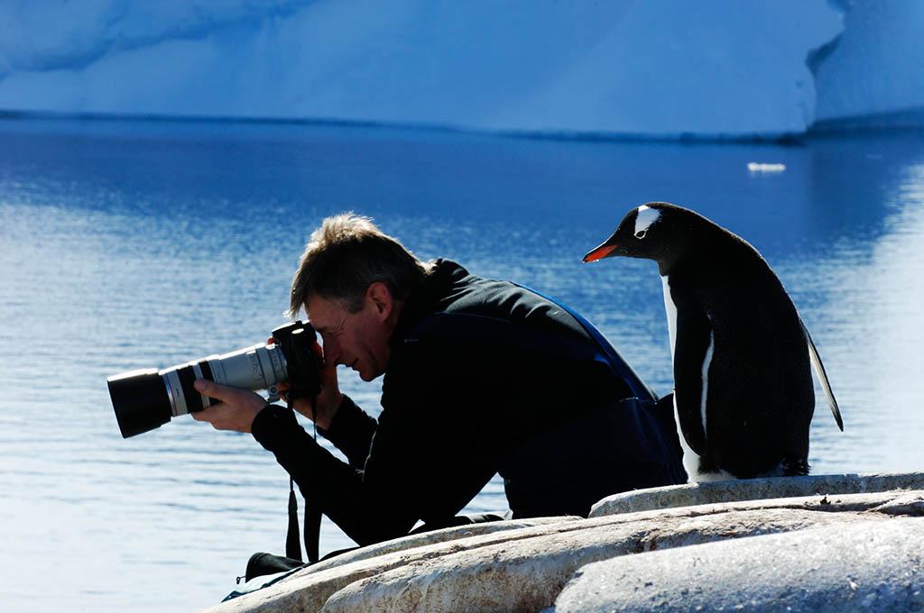 Fotograaf en ezelspinguïn