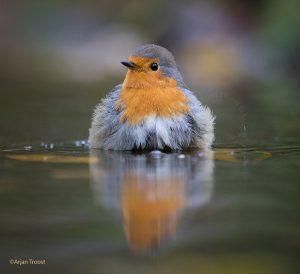 Tijd voor een bad. - Fotograaf: Arjan Troost