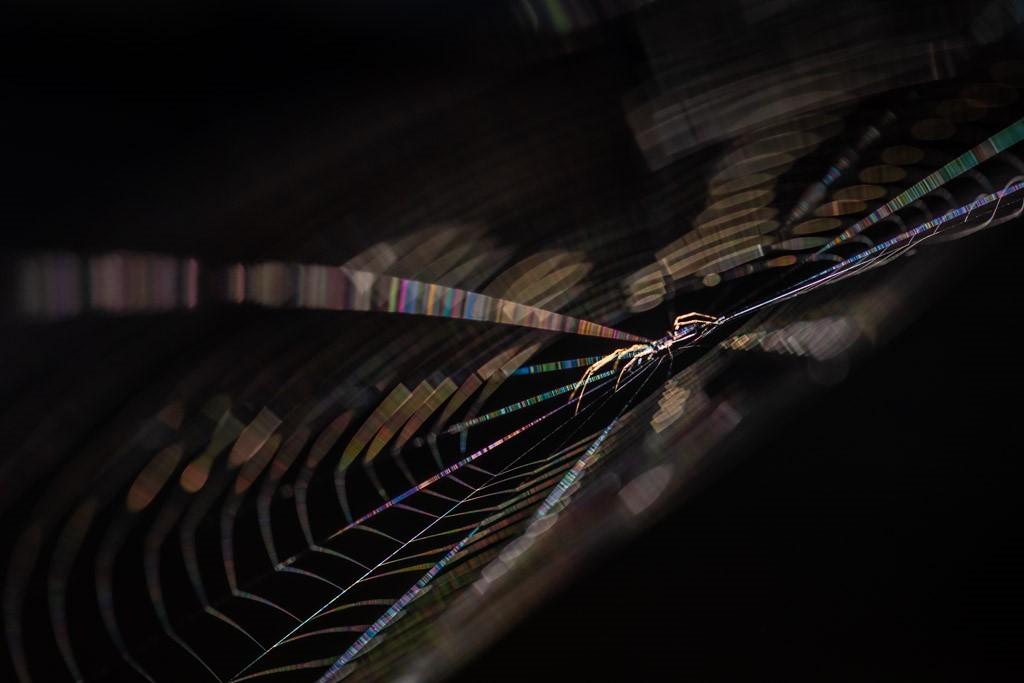 Spinnetje in het web
