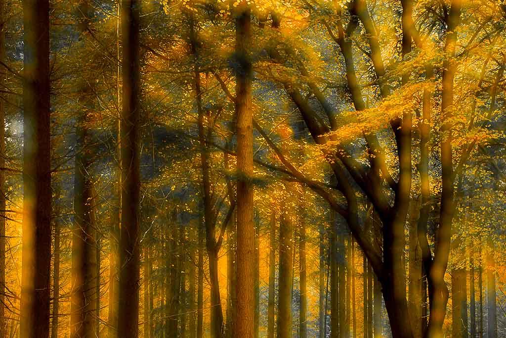 Fotobespreking thema 'herfst': Antwan en Ina