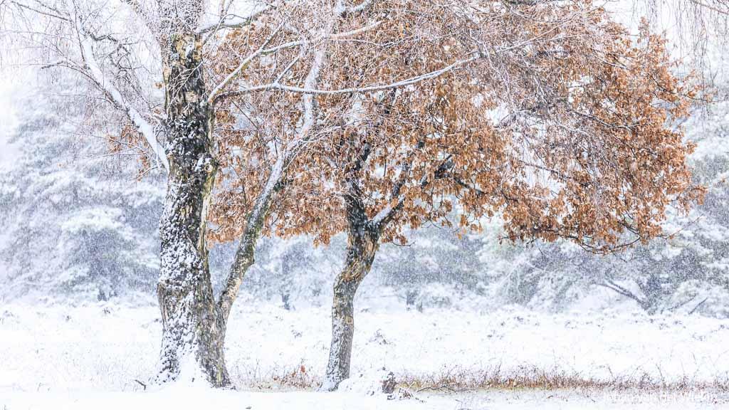 Nieuw thema fotobespreking: sneeuw!