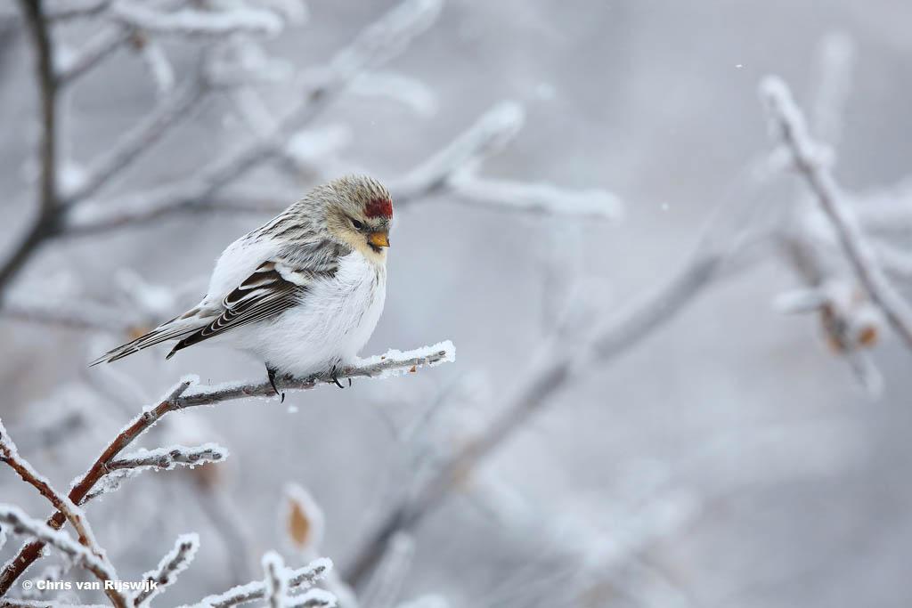 Waarom natuurfotografie zo geinig is