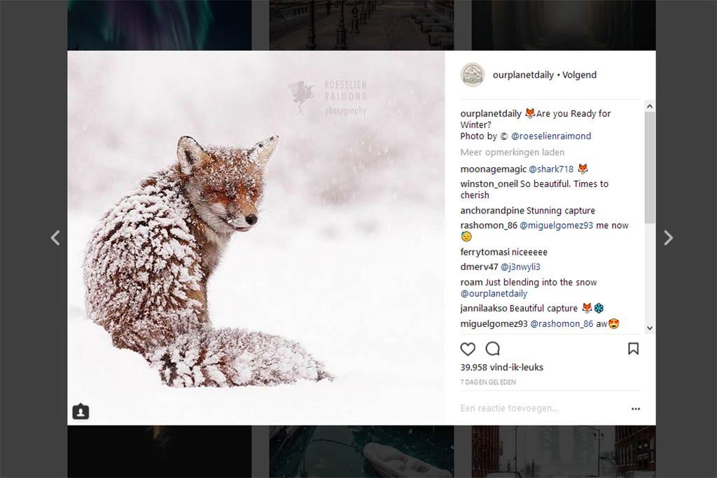 instagram Roeselien feature