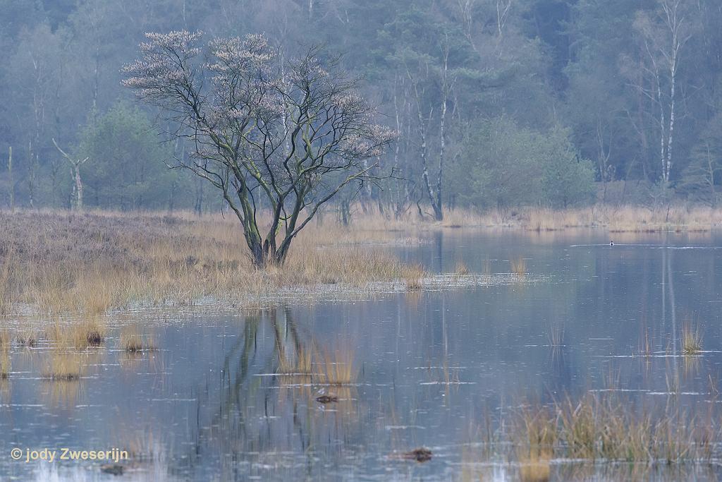Compact landschap