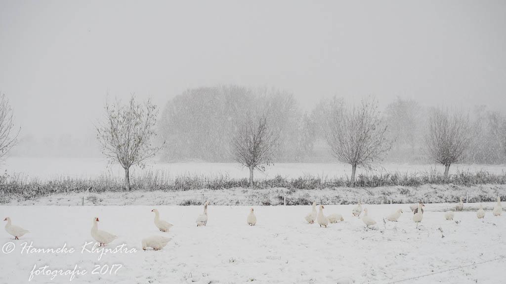 Fotobespreking thema 'sneeuw!'