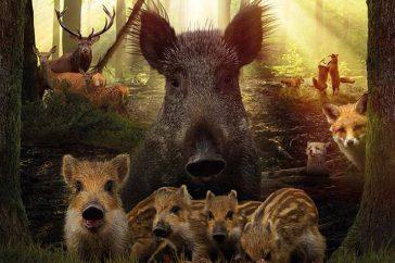 Natuurfilm Wild
