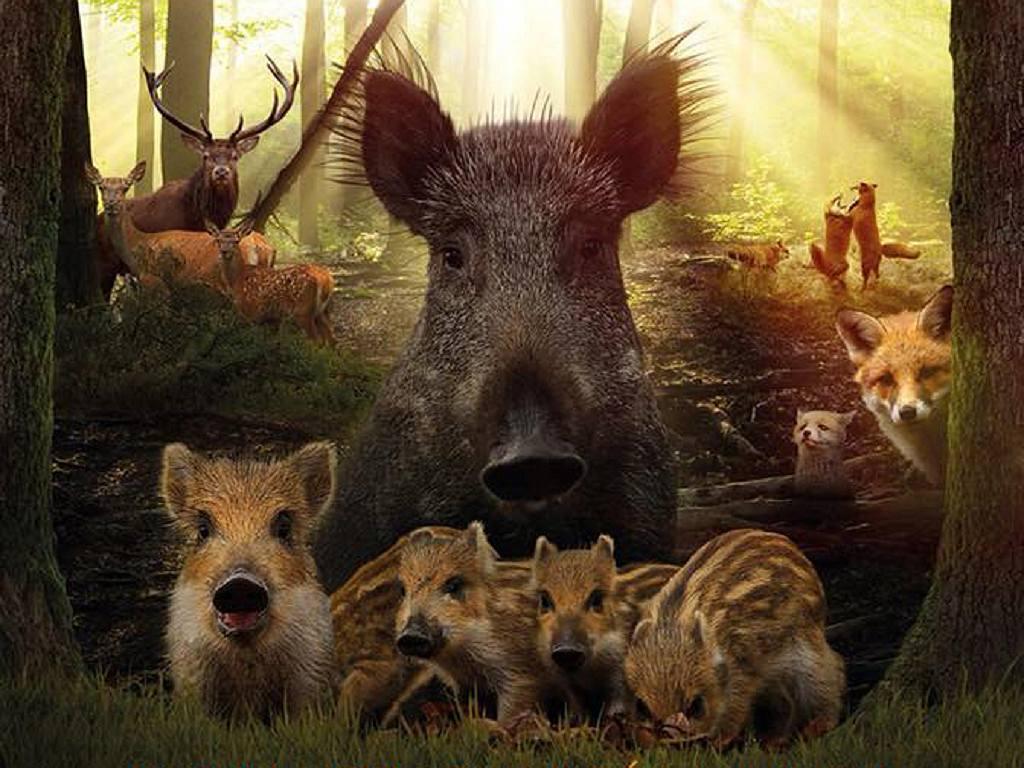 Natuurfilm Wild, bonte families op de Veluwe