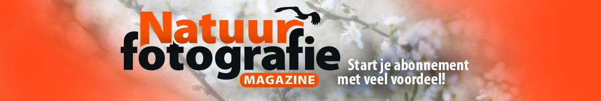 NF Magazine Banner