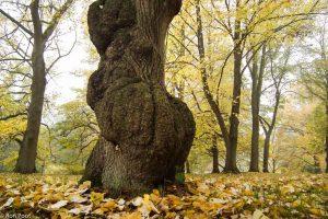 Bizarre vormen in het arboretum Poort-Bulten. - Fotograaf: Ron Poot