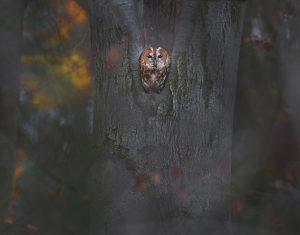 Herfststemming. - Fotograaf: Thijs Glastra