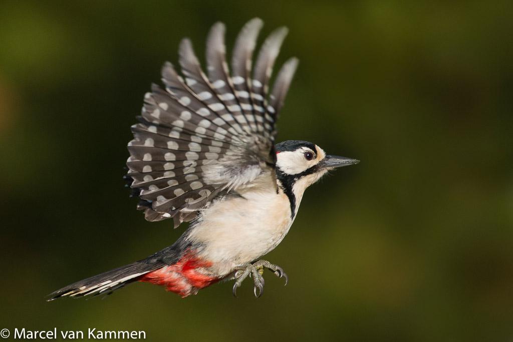 vliegende tuinvogels
