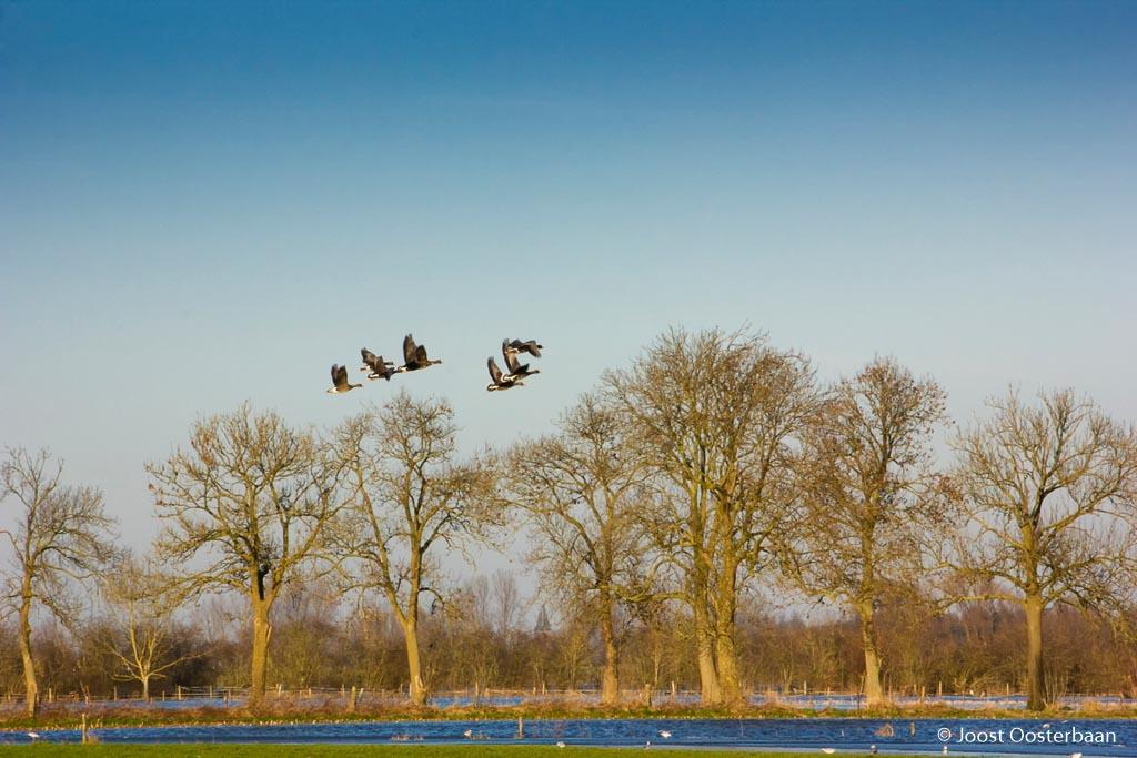 Fotobespreking thema 'natuur in de wintermaanden': Joost en Jeroen
