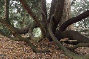 Het arboretum Poort-bulten bezit een verzameling bijzondere en excentrieke bomen. - Fotograaf: Ron Poot