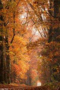 Herfstsfeer op het landgoed Schoonheten. - Fotograaf: Ron Poot