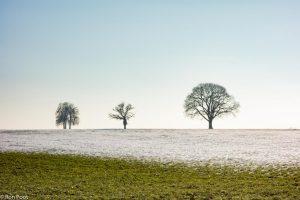 Vrijstaande bomen op het landgoed Twickel. - Fotograaf: Ron Poot