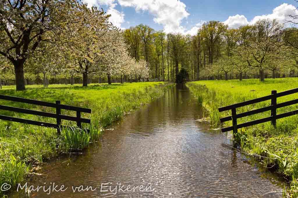 Gebieden fotograferen Natuurfotografie.nl:Landgoed Oostbroek, een verborgen parel