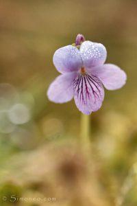 Inzoomen op de bloempjes levert mooie plaatjes op. - Fotograaf: Simone Opdam