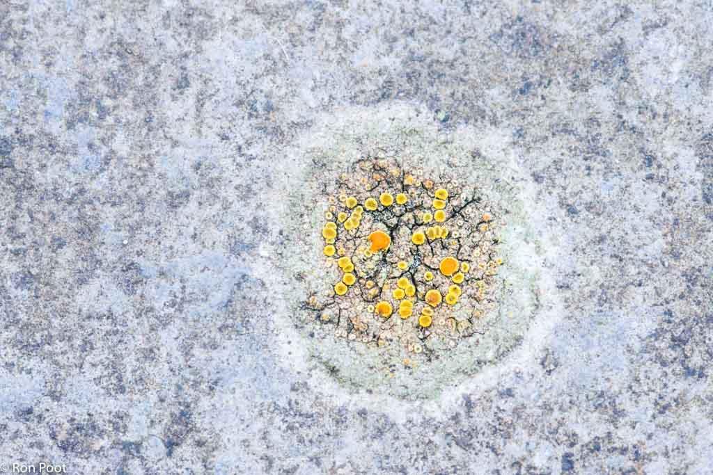 Korstmossen op een tuintegel