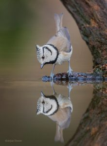 Spiegeltje spiegeltje aan de wand... - Fotograaf: Arjan Troost