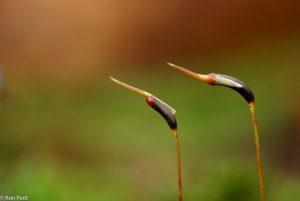 Twee rijpende kapsels in het vroege voorjaar.  - Fotograaf: Ron Poot