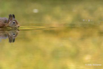 De kijkrichting van de eekhoorn naar rechts