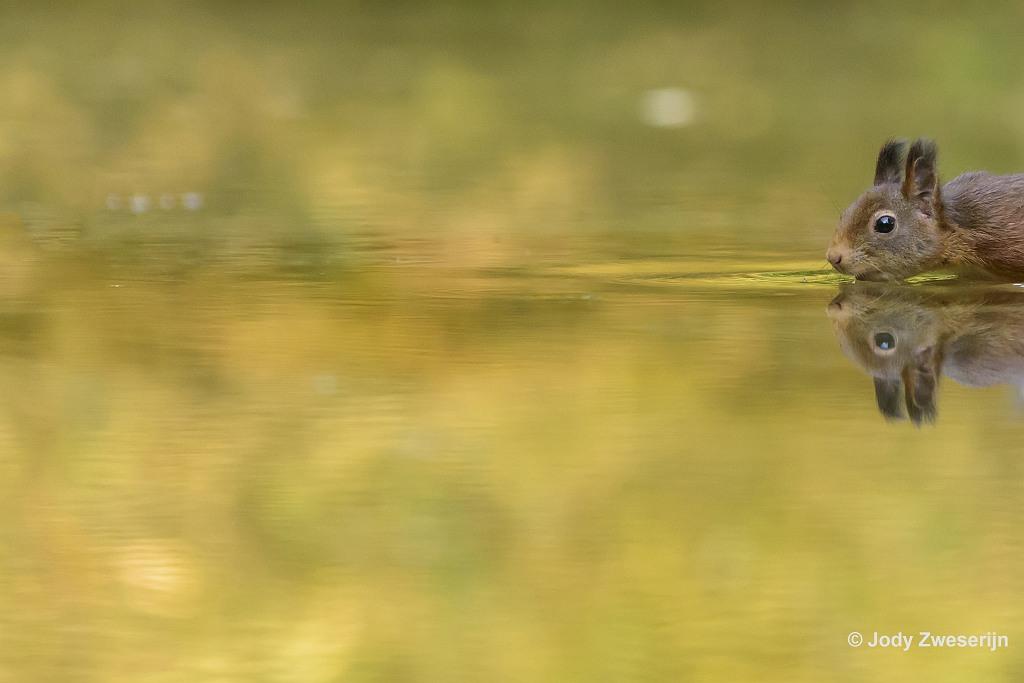De kijkrichting van de eekhoorn naar links