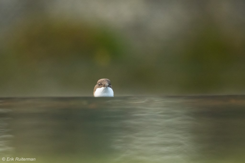 Als een vis zonder water