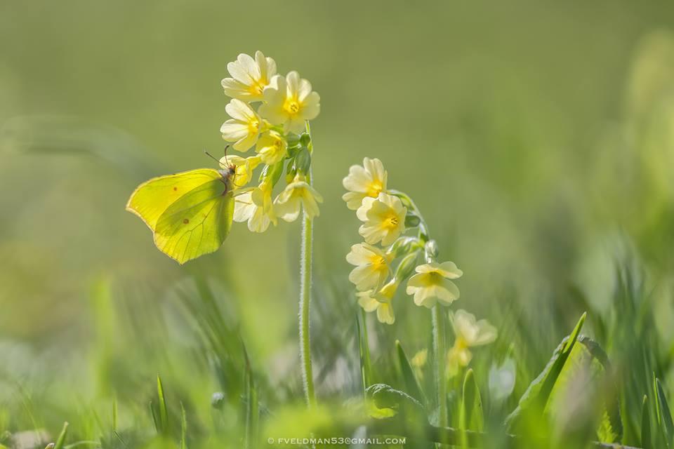 Natuurfotografie kalender voor maart