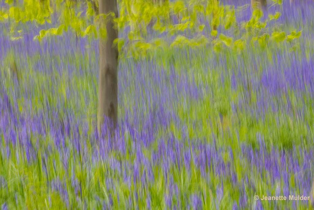 Gebieden fotograferen Natuurfotografie.nl:Creëer je eigen sprookje in het Hallerbos