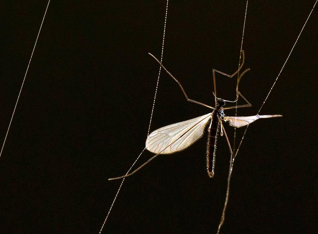 Spinnenweb met slachtoffer