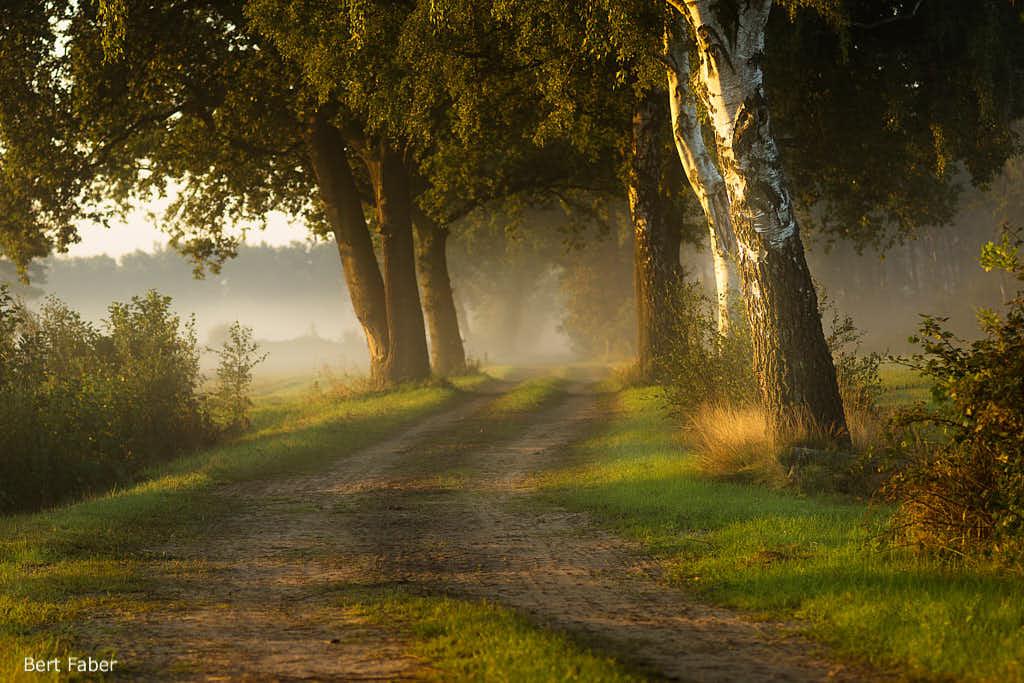 Mist & mooi licht