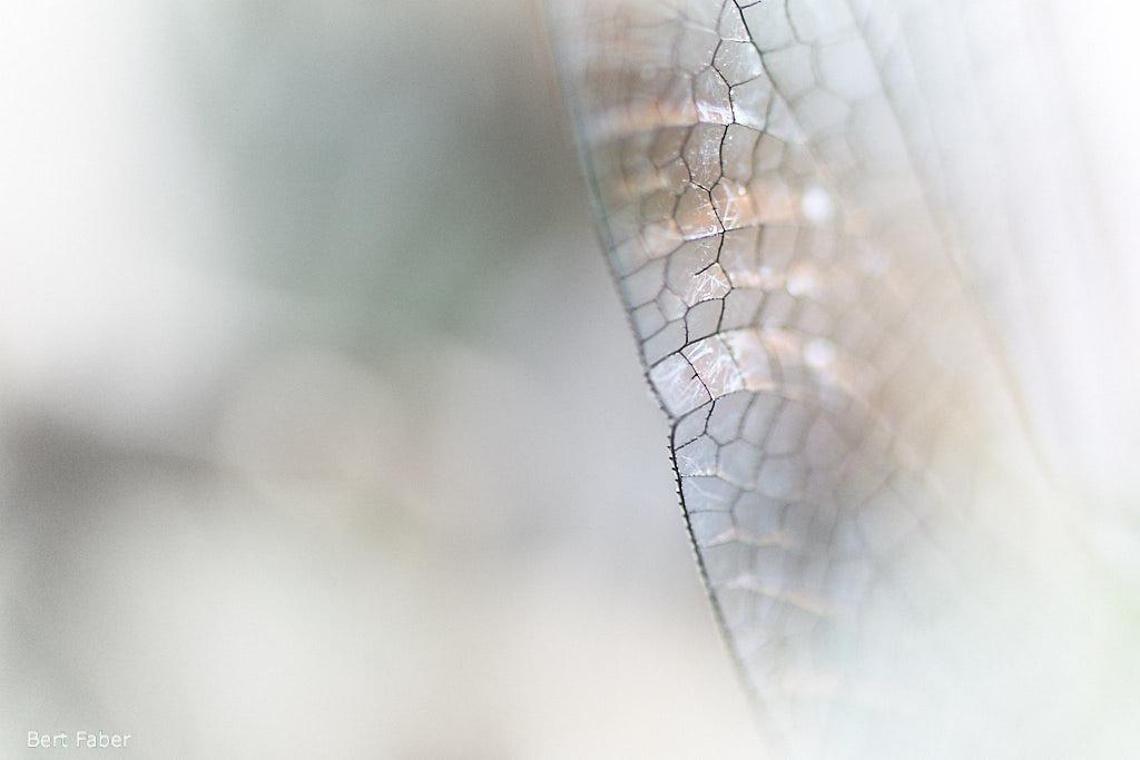 Vleugel details