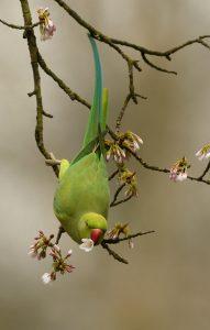 De lenige vogels bewegen zich in duizend bochten op zoek naar voedsel.  - Fotograaf: Leo Snellink