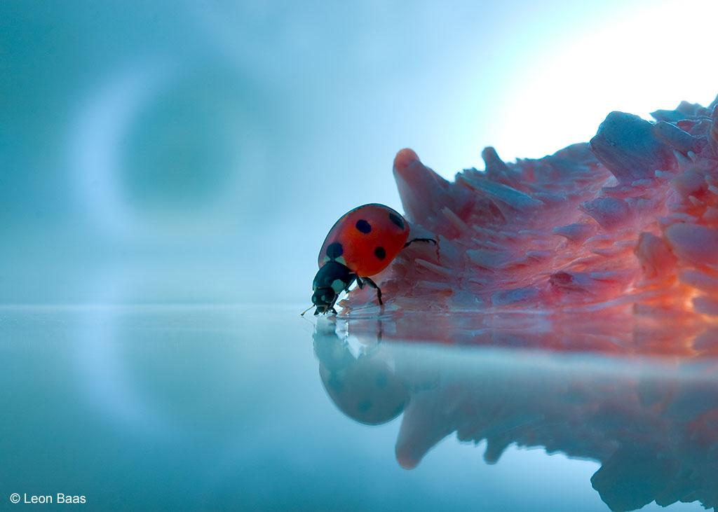 lieveheersbeestje reflectie