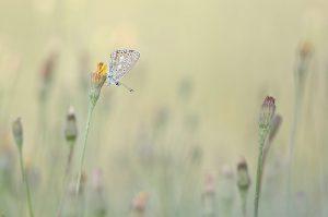 Geef het vlindertje gerust wat ruimte, de omgeving heeft ook een verhaal. - Fotograaf: Johan van Gurp