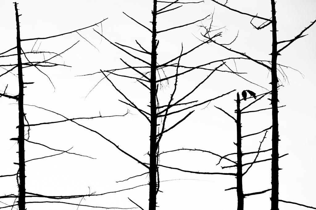Ochtend tafereel in dode bomen