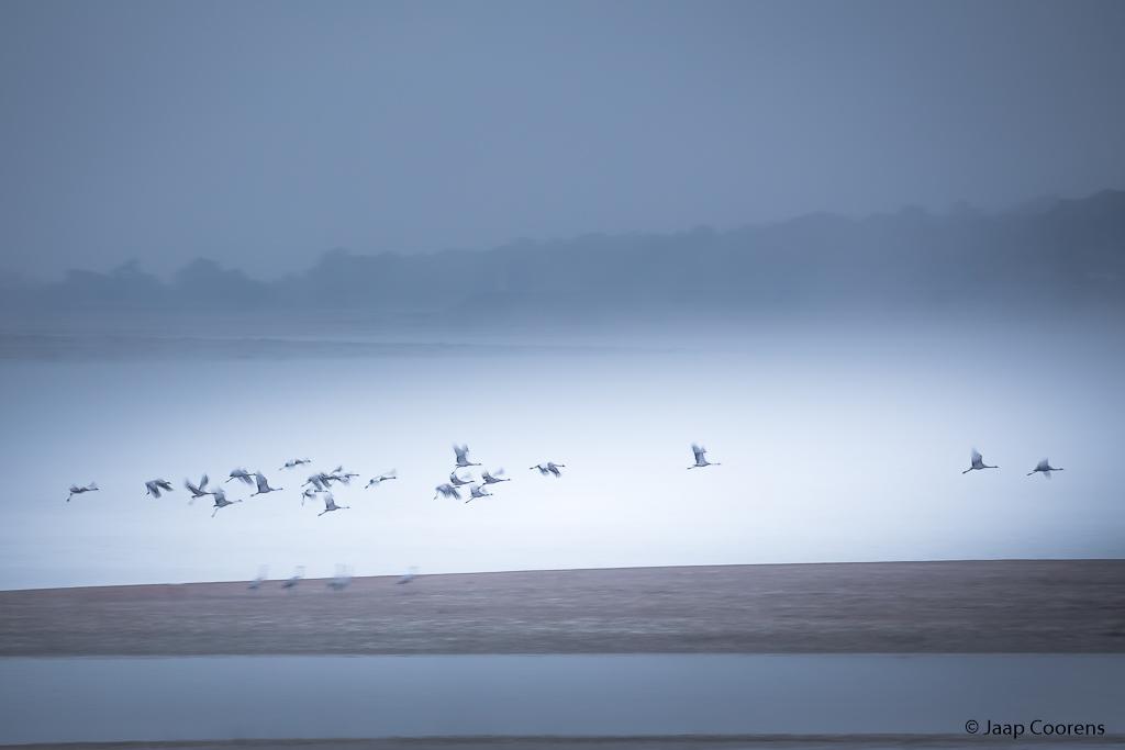 Fotobespreking thema '(tuin) vogels': Jaap en Ron