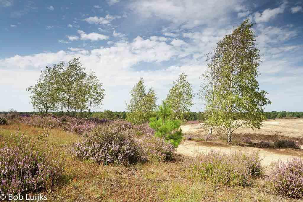 Gebieden fotograferen Natuurfotografie.nl:Nationaal Park De Maasduinen