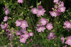 Een groepje bloemen, met de volle zon geeft het een zomerse sfeer.  - Fotograaf: Ron Poot