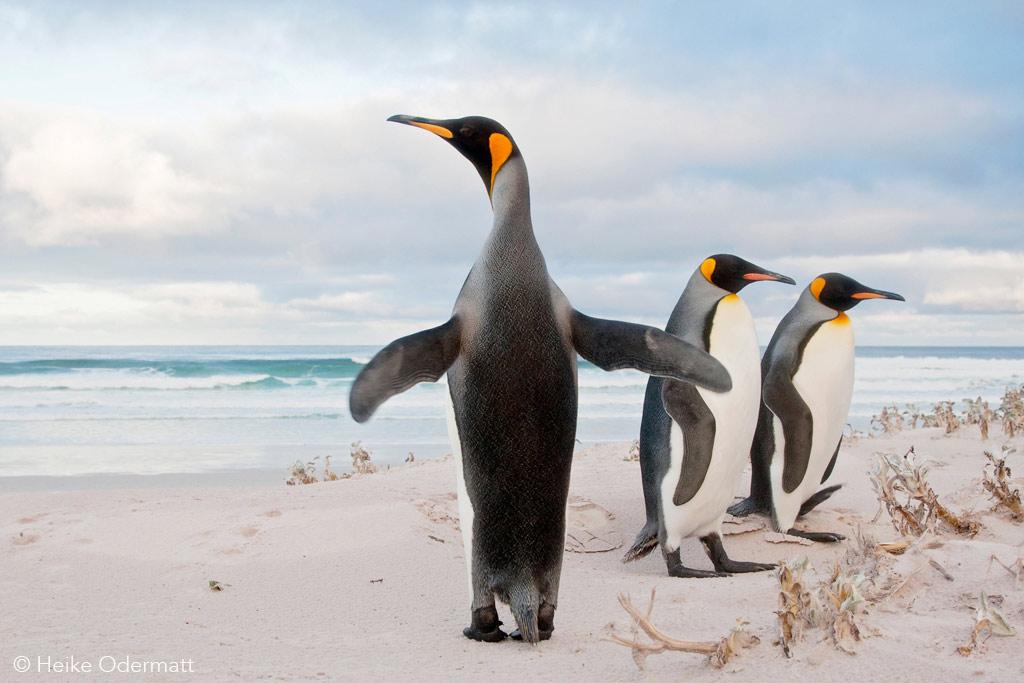Falkland Eilanden