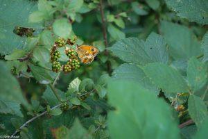 Laat de omgeving mee doen in je beeld, het vertelt iets over het leefgebied van de vlinder. - Fotograaf: Ron Poot