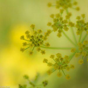 De fragiele schermen in gele tinten geven een zacht beeld.  - Fotograaf: Ron Poot
