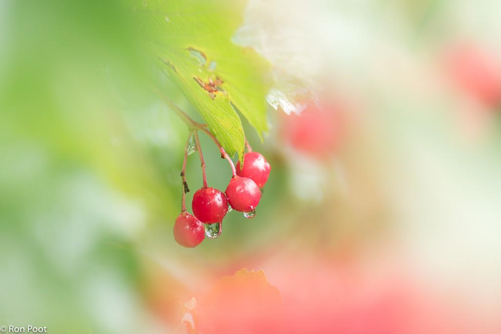 Kleurige vruchten