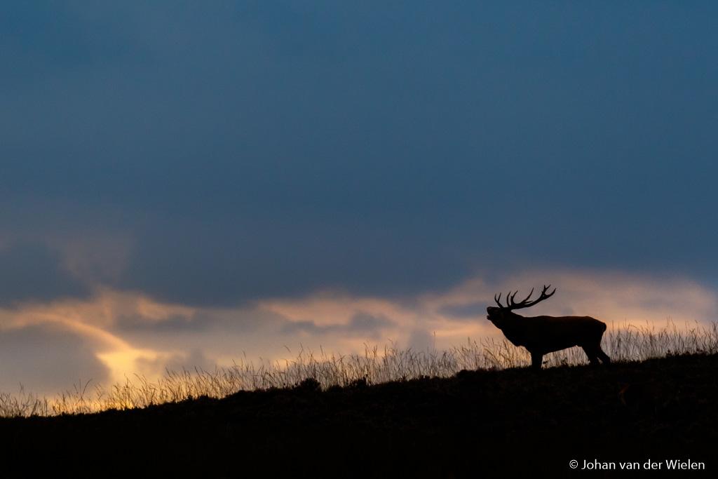 Nieuw thema fotobespreking: zoogdieren uit de Benelux